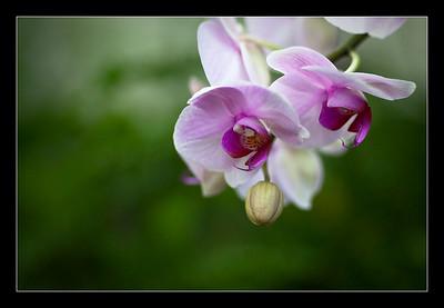 new-flowers-73