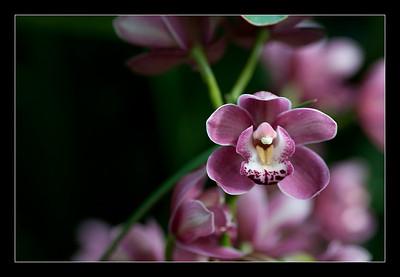 new-flowers-19