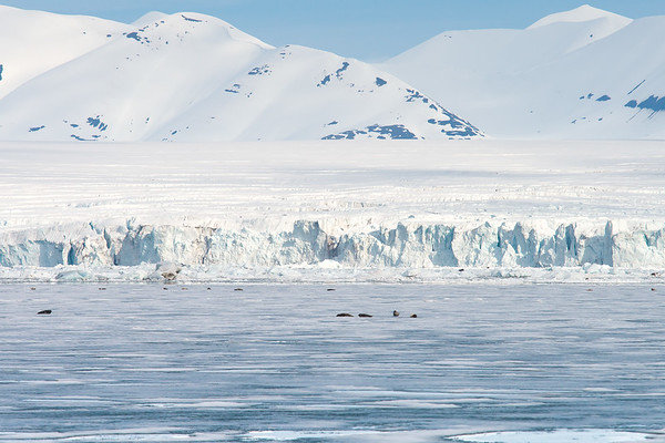 Seals in the foreground