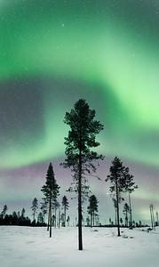 Forest aurora, arctic Sweden
