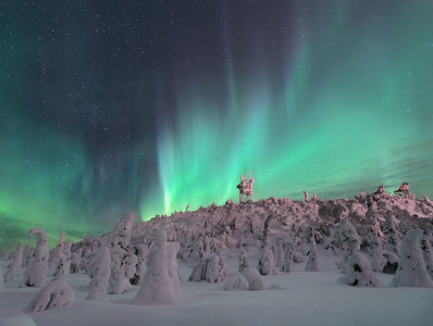 Aurora Borealis and frozen trees, Finland