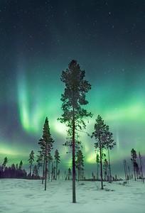 Aurora Borealis over forest, Sweden