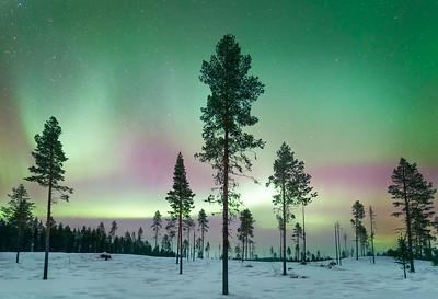 Forest aurora 2, arctic Sweden