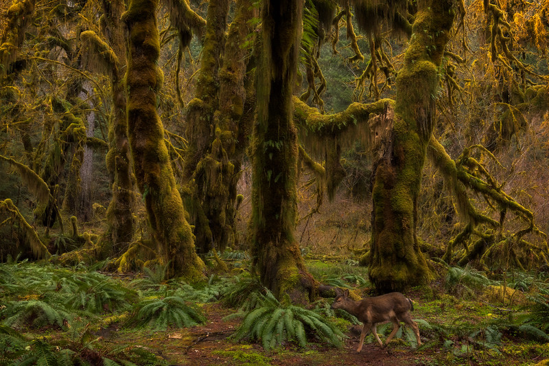 Hall of Mosses Deer Crossing