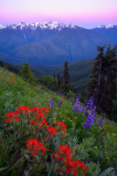 Olympic Mountains Bouquet