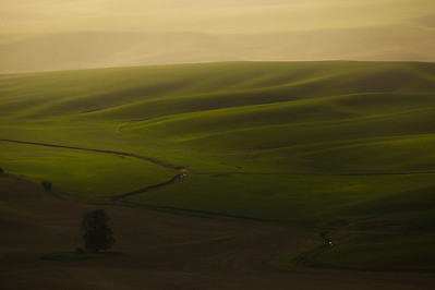 Soft Light, Green Hills, The Palouse