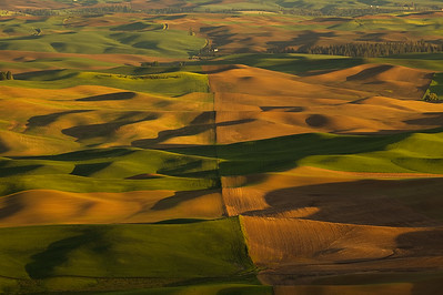 Fields of Wheat, Steptoe Butte