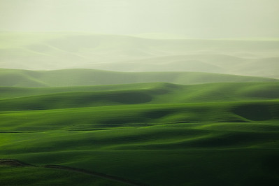 Green Hills with Soft light, The Palouse Wa.