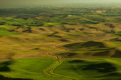 The Hills of Palouse from Steptoe Butte, Washington State