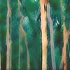 Abstract Australian misty Eucalyptus forest