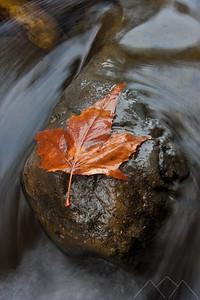 Leaf on a Rock in Oak Creek, Sedona, USA