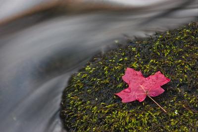 Leaf in West Fork of Oak Creek, Sedona, AZ
