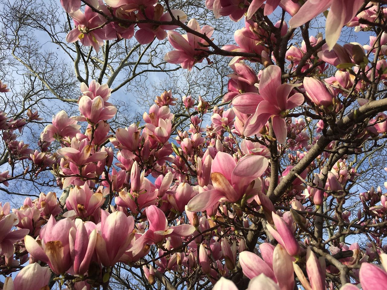 spring at Prospect Park
