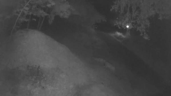 Puma pair, 2/21/2018, 2:46am