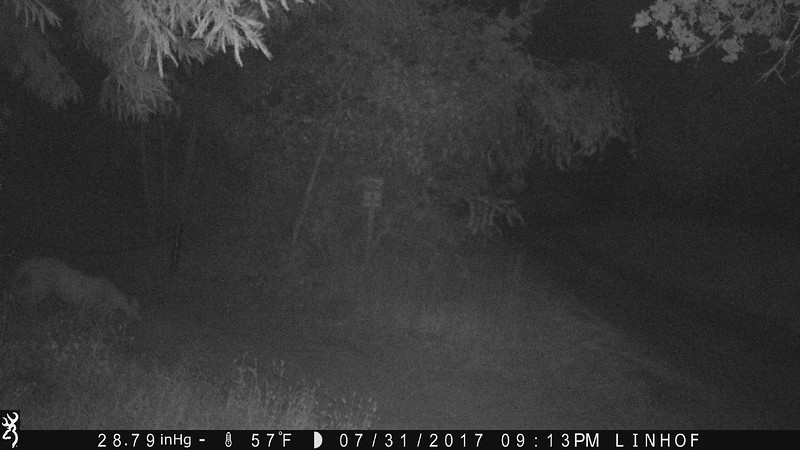 July 31, 2017, 10:13pm  Mountain lion next to the driveway