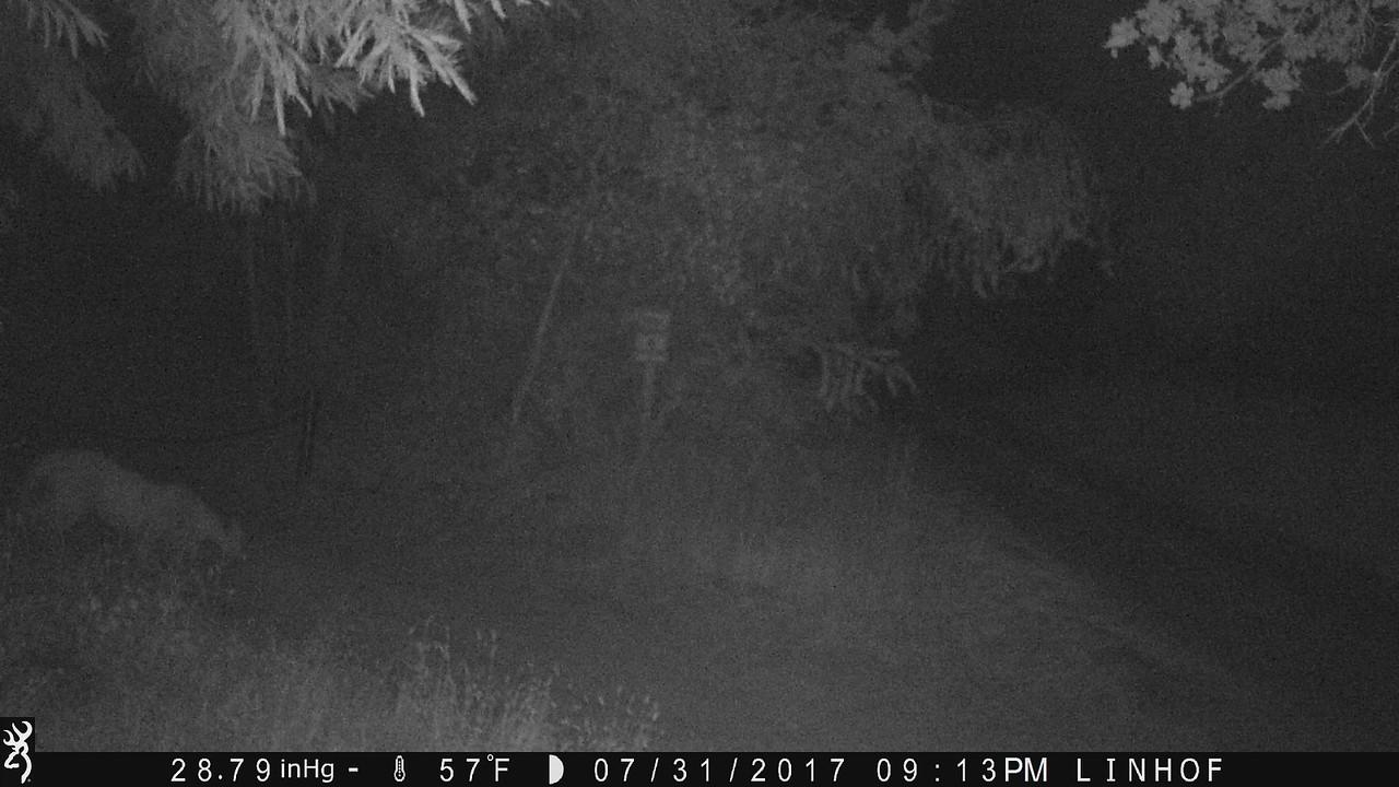 July 31, 2017, 10:13pm  Mountain lion next to the driveway