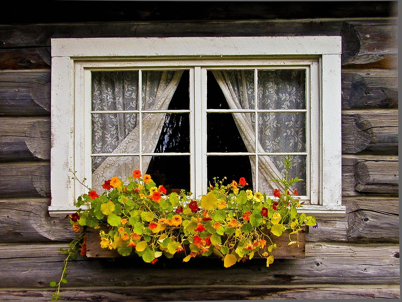 Window box near Homer, Alaska