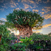 Animal Kingdom: The Tree of Life