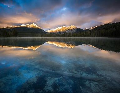 Pettit Lake - Golden Matriarchs