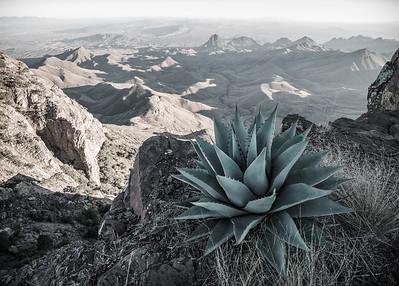 Desert's Edge