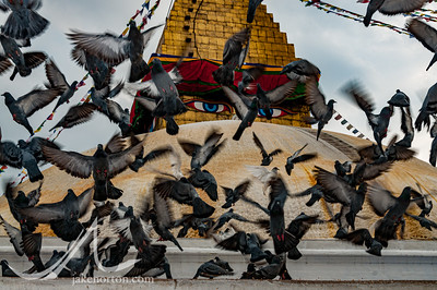 Pigeons flutter in front of the all-seeing Eyes of Buddha at Bodhanath Stupa, Kathmandu, Nepal.
