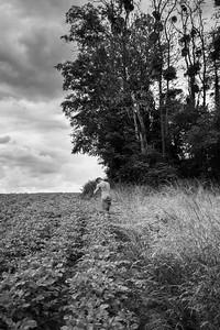 sur le pas de Vincent van Gogh | in the footsteps of Vincent van Gogh | Auvers-sur-Oise, France
