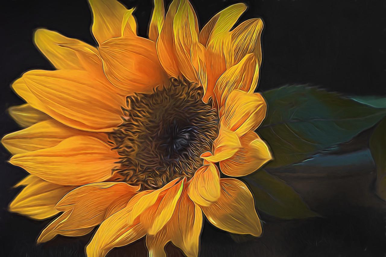Sunflower Sass