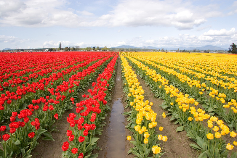 Red and yellow rows