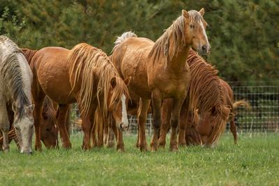 Hallelujah Stallions at Wells Creek in Goodhue