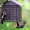 Downy Woodpecker (12)