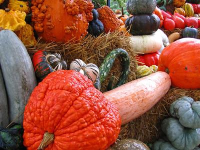 Pumpkin Harvest Display (6)
