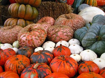Pumpkin Harvest Display (11)