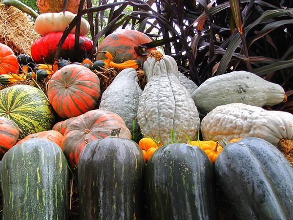 Pumpkin Harvest Display (19)