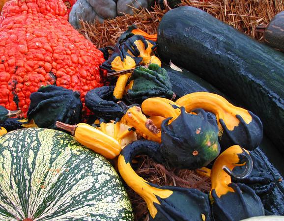 Pumpkin Harvest Display (10)