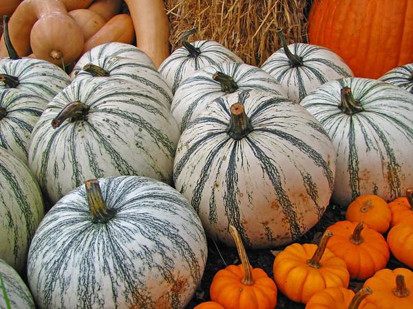 Pumpkin Harvest Display (8)