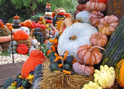 Pumpkin Harvest Display (1)