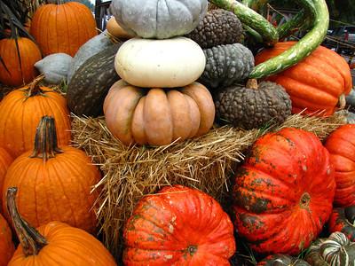 Pumpkin Harvest Display (2)