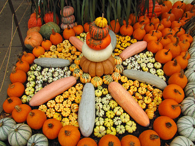 Pumpkin Harvest Display (14)