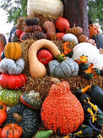 Pumpkin Harvest Display (9)