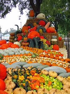 Pumpkin Harvest Display (15)