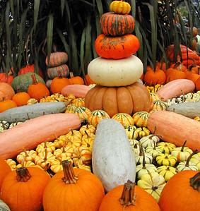 Pumpkin Harvest Display (13)