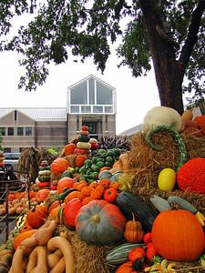 Pumpkin Harvest Display (4)