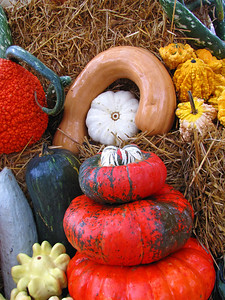 Pumpkin Harvest Display (5)