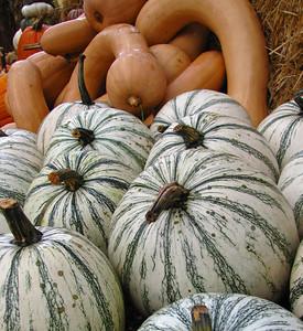 Pumpkin Harvest Display (7)