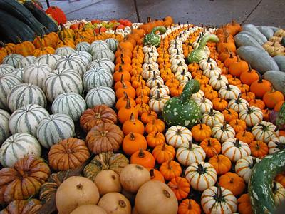Pumpkin Harvest Display (18)