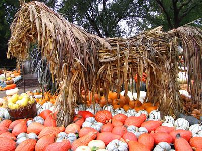 Pumpkin Harvest Display (3)