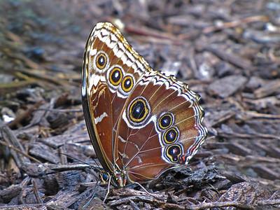 Butterfly (22)