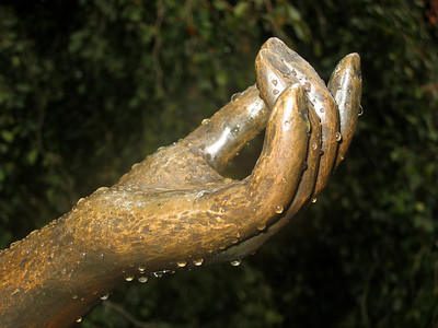 Hands, visual expressions of life (1)