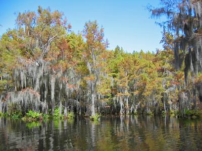 2003 Lake Bistineau, Louisiana (20)