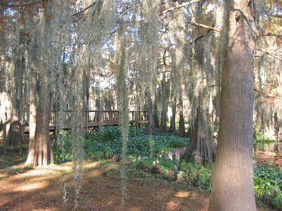 2003 Lake Bistineau, Louisiana (5)
